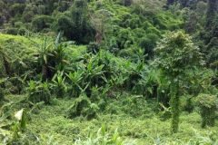 Forêt tropicale - Dans la région de Chiang Mai, Thaïlande